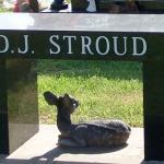 stroud_bench