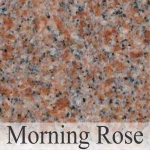 morning rose1